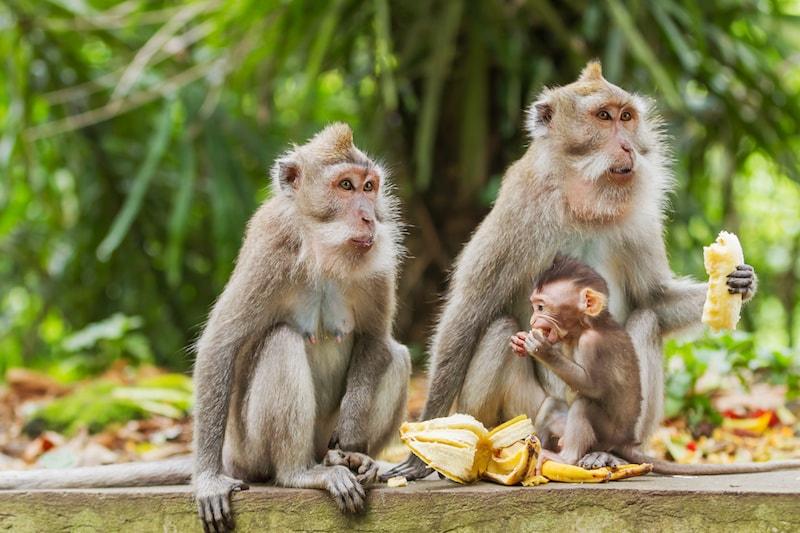 Forêt des singes - Ubud