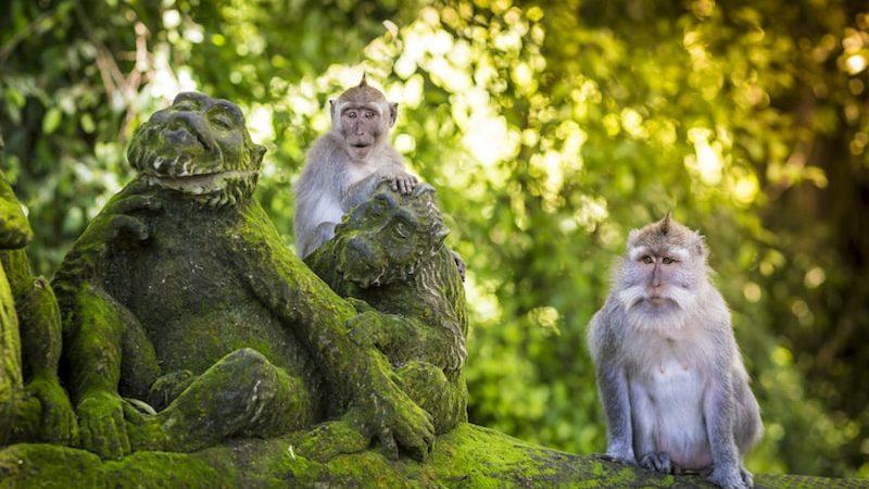 La Forêt des singes d'Ubud