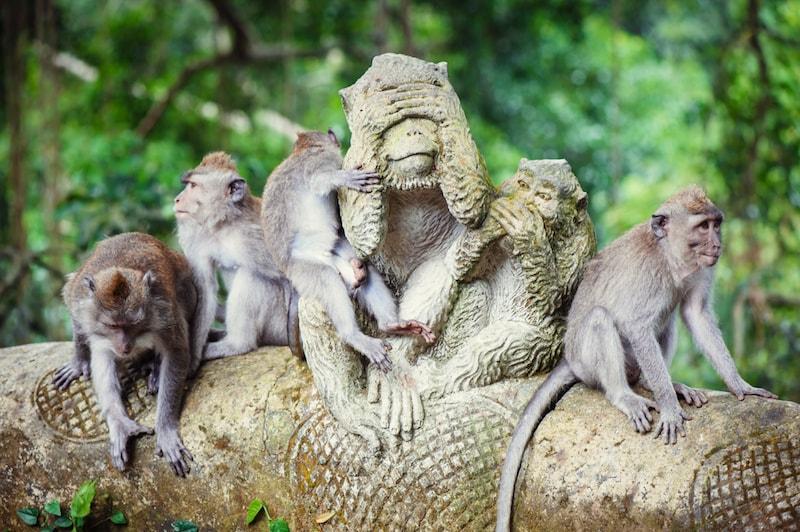 Visiter Forêt des singes Ubud