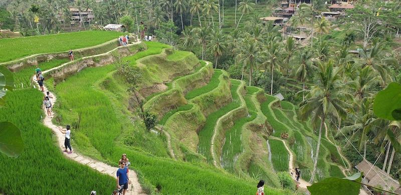 rizières en terrasse de Tegallalang Ubud
