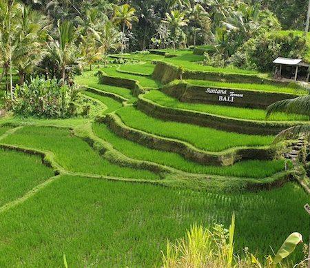 Guide Ubud : que faire – que voir ?